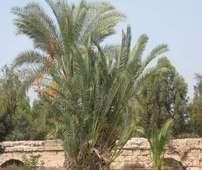 בית חנניה